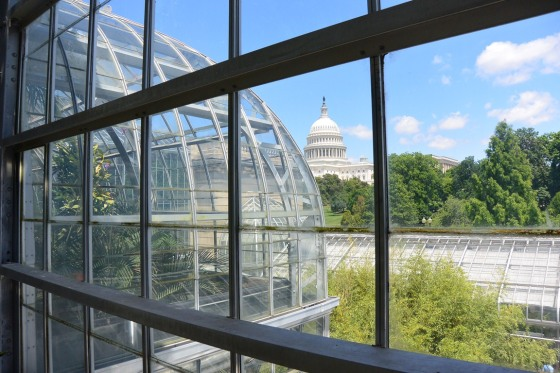 View of the Capitol Building from inside the US Botanic Garden Conservatory.